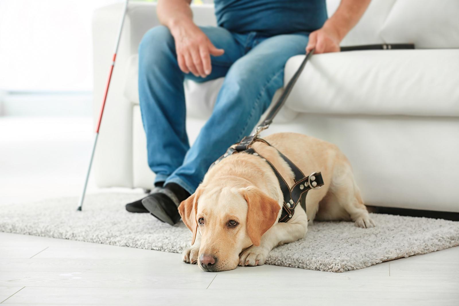 Elderly Care in Roseville CA: Service Dog Eligibility